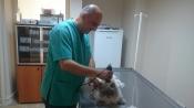 Yıldız veteriner kliniği